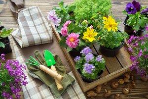 Garden flowers and garden equipment.