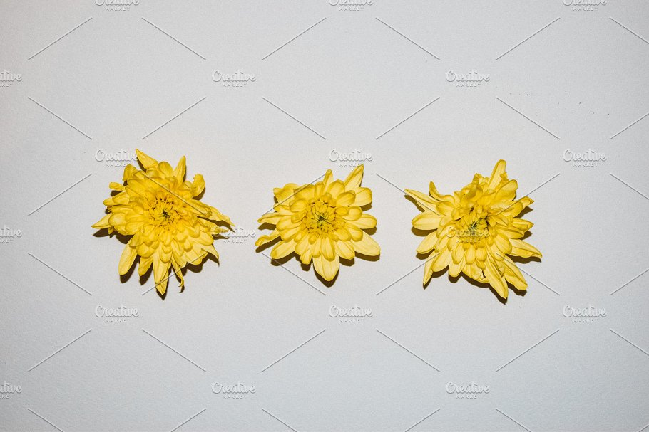 Three yellow flower mockup arts entertainment photos creative three yellow flower mockup arts entertainment mightylinksfo