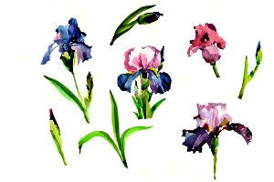 Purple irises flowers PNG watercolor
