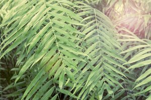 Green background of Tropical palm