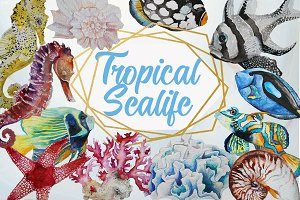 Tropical Sea Life
