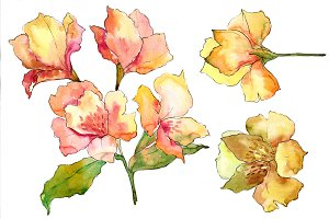 Yellow alstroemeria flower PNG set