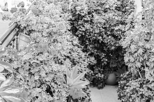 Outside Garden in Black and White