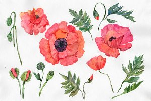 Red poppy PNG watercolor flowers