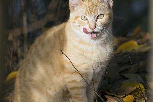 Rural Cat in autumn
