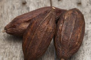 cocoa fruit on rustic wooden background