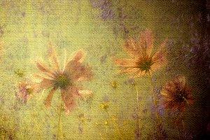 Pink daisies on grunge background