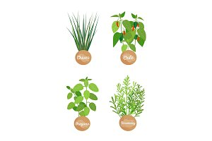Oregano and Rosemary Set, Chives Chilli Vector Set
