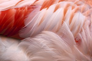 Feathered dream