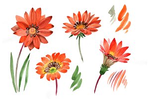Flower orange gazania PNG watercolor