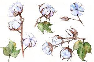 Flower soft cotton PNG watercolor