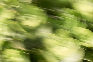 Green leaves with motion blur effect