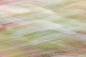 Blossom flowers with motion blur