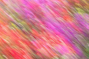Azalea flowers with motion blur