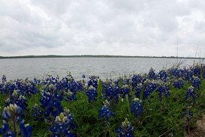 Bluebonnet Lake
