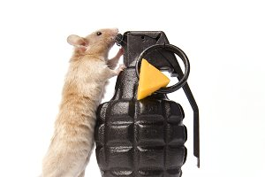 Extreme Mouse Trap