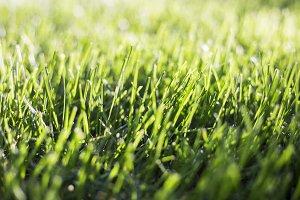 Grass greenery