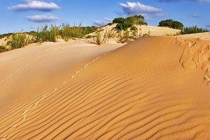 The sandy dunes