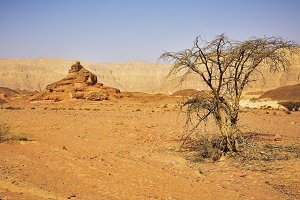Desert, stones and the trees