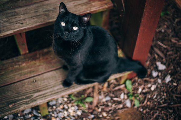 Beautiful Black Cat With Yellow Eyes High Quality Animal Stock Photos Creative Market