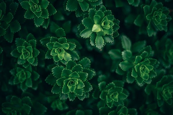 Nature Stock Photos: Inspirationfeed - Neon Green Plants in Low Light
