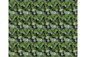 Seamless pattern texture of bush branch with green leaves
