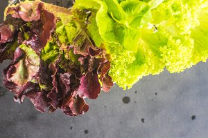 Healthy food lettuce leaves