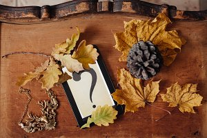 autumn leaves and a question eBook