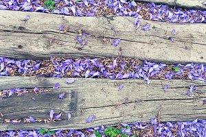 Petals of jacaranda #2