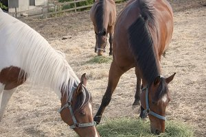 Hungry Horses 2