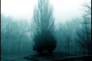 Incredible Trees World