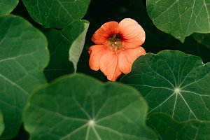 Red Flower and Big Leaves