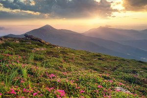 Natural landscape in the summer time