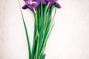 Floral Stock Photo - Styled Iris