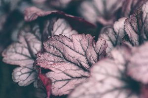Natural burgundy colored background