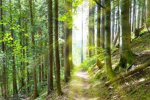 Path through green trees