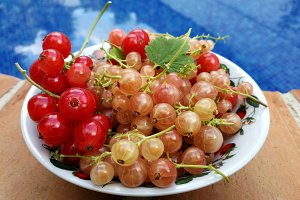 Bowl with currants near the pool