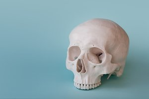 Human skull no jaw on clear blue