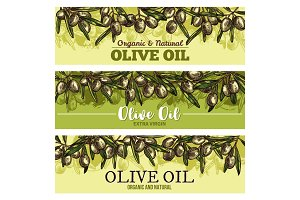 Olive oil banner with border of green fruit sketch