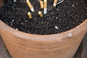 Growing Cigarettes (Photo)