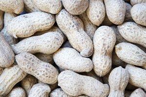 Peanuts in a shell. Peanut backgroun
