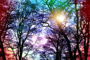 Sunset Spring Trees