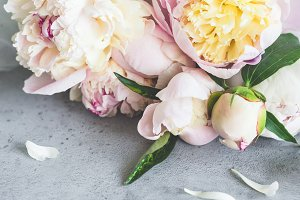 Beautiful pastel peonies on grey