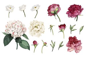 Floral set (VECTOR)