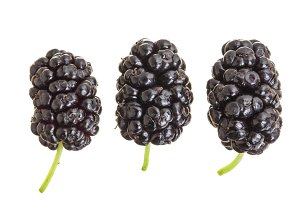 Mulberry berry isolated on white background. Top view. Flat lay