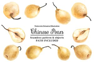 Fresh Chinese Pears by watercolor