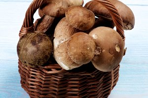 Fresh Boletus Mushrooms