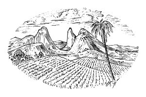 Coffee field, cocoa plantation. Vintage landscape, old looking scratchboard or tattoo style for menu and signage in the bar. engraved hand drawn sketch for label or T-shirt. Wine company bottle design