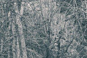 Panoramic Leaveless Tree Branches
