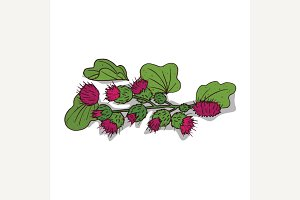 Isolated clipart Burdock